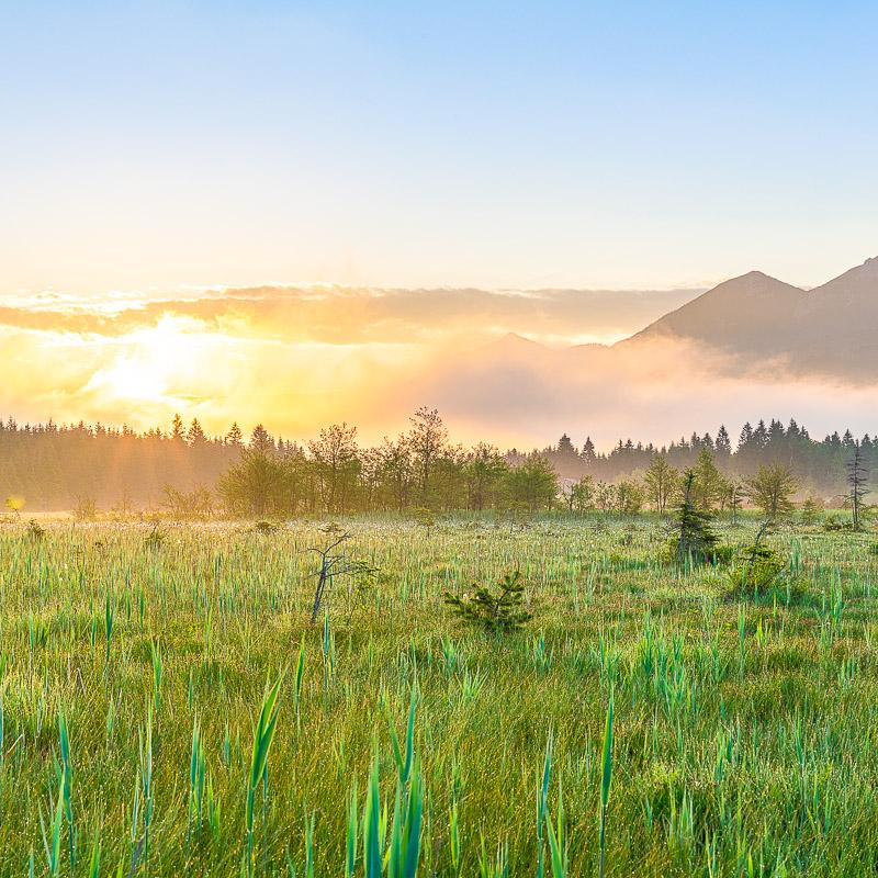 Morgenfrische